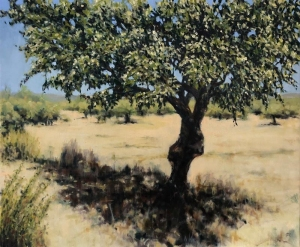 Olive tree, Laconia 1. Oil on canvas; 24x20in