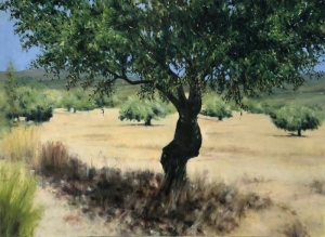Olive tree, Laconia 1. Oil on canvas; 40x30in